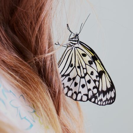 Product Butterfly Idea leuconoe