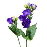 Bouquet Purple eustoma by the piece