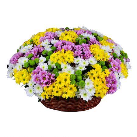Bouquet Basket of chysanthemums (101 pcs.)