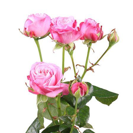Bouquet Piece bush rose Lady Bombastique