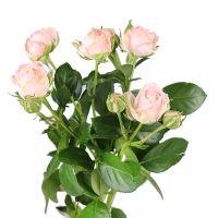 Product Rose Miss Bombastik per piece