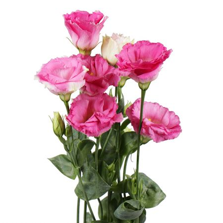 Bouquet Pink eustoma by the piece